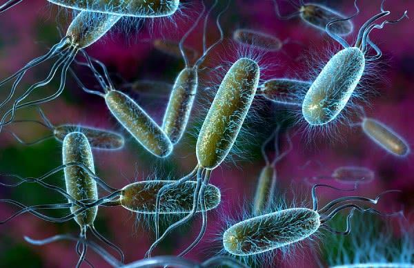 Болезнетворные бактерии в кишечнике