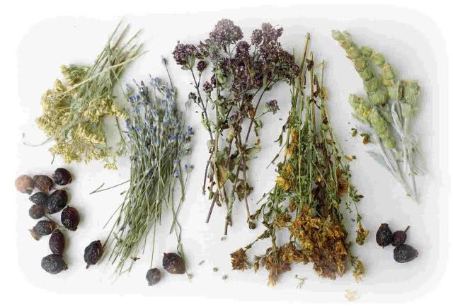 Высушенные лекарственные травы