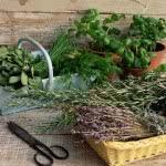 Потрясающие полезные свойства лечебных трав от геморроя