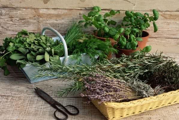 Собранные лекарственные травы