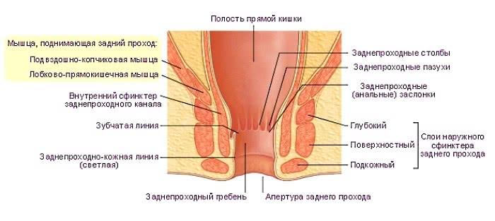 perets-v-analnoe
