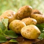 Картофель для лечения геморроя: более пяти проверенных способов применения