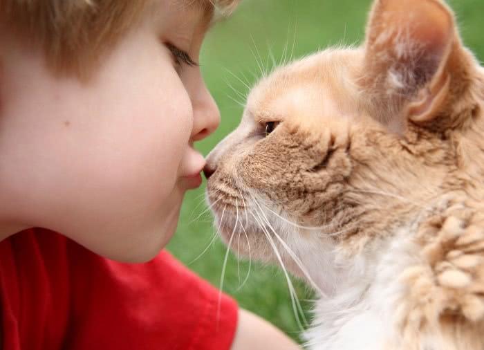Ребенок целует кошку