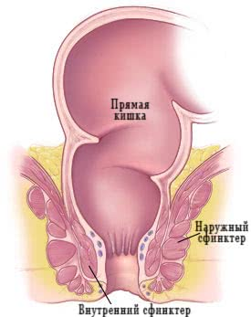 Изображение внутреннего и наружного сфинктера