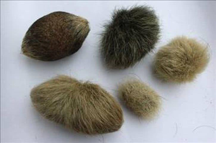Безоар - камень, который образуется в желудке животных