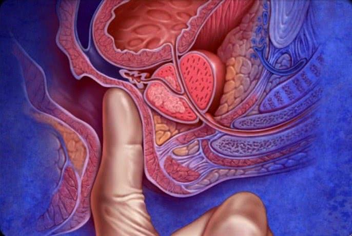 Предстательная железа расположена в непосредственной близости от прямой кишки